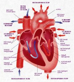 Гипертония и сердце взаимосвязь thumbnail